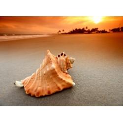 infrapanel - Mušle na pláži