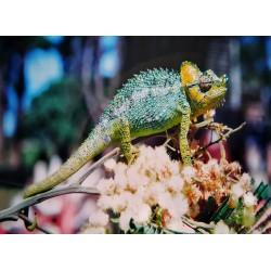 infrapanel - Chameleon