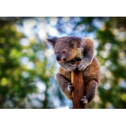 infrapanel - Koala