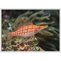 Topný obraz - Ryba na korálovém útesu