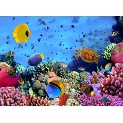infrapanel - Korálový útes