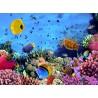 Topný obraz - Korálový útes