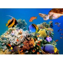 infrapanel - Podmořský svět