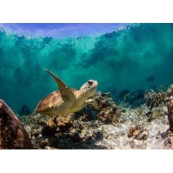 infrapanel - Mořská želva