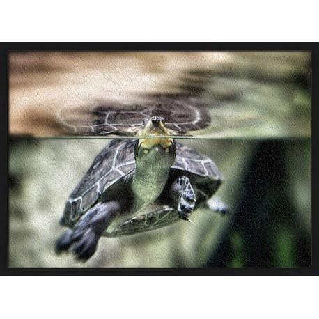 Topný obraz - Vodní želva