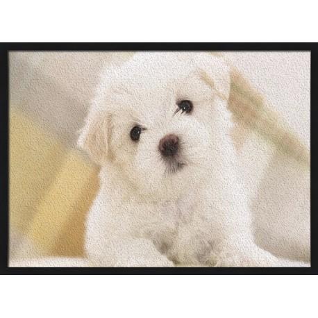 Topný obraz - Maltézský psík