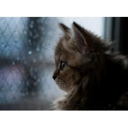 infrapanel - Kotě u okna