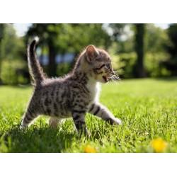 infrapanel - Mourovaté kotě