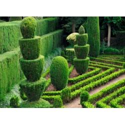 infrapanel - Královská zahrada