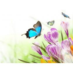 infrapanel - Motýl