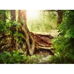 infrapanel - Nádherné místo v lese