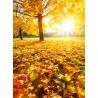 Topný obraz - Podzim
