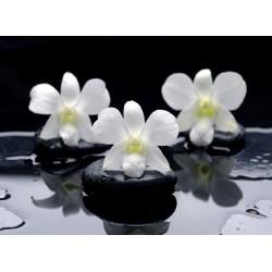 infrapanel - Lávové kameny a květy
