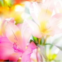 infrapanel - Květiny