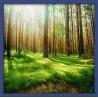 Topný obraz - Lesní ráj
