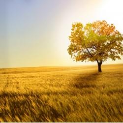 infrapanel - Strom v savaně