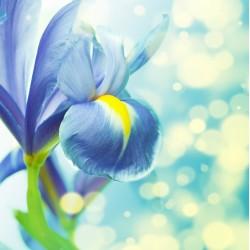 infrapanel - Modrá květina