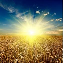 infrapanel - Slunce nad polem