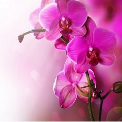 infrapanel - Fialová květina