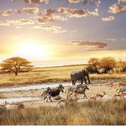 infrapanel - Africké pláně