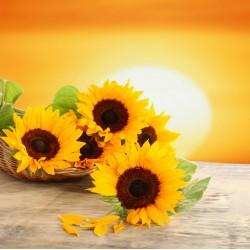 infrapanel - Květy slunečnic