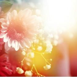 infrapanel - Sluneční paprsky a květiny