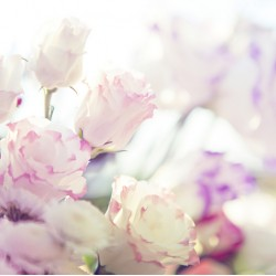 infrapanel - Růžové květy
