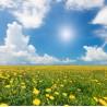 Topný obraz - Kvetoucí pole