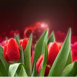 infrapanel - Valentýnské růže