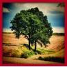 Topný obraz - Strom v poli