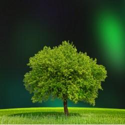 infrapanel - Zelený strom