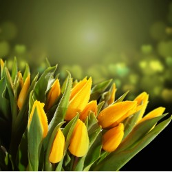 infrapanel - Žluté tulipány