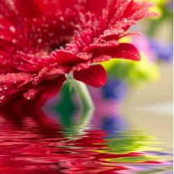 infrapanel - Květina na hladině