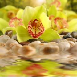 infrapanel - Žlutozelená orchidej