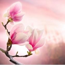infrapanel - Kvetoucí strom