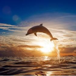 infrapanel - Delfín při západu slunce