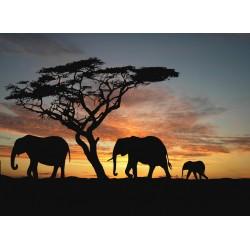 infrapanel - Silueta slonů