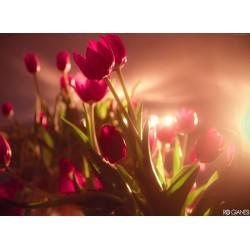 infrapanel - Květy