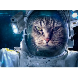 infrapanel - Kočičí kosmonaut