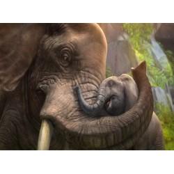 infrapanel - Sloní objetí