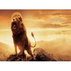 infrapanel - Lví řev