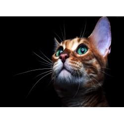 infrapanel - Kočka ve tmě