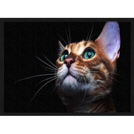 Topný obraz - Kočka ve tmě