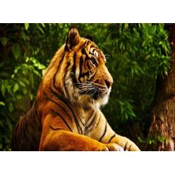 infrapanel - Tygr