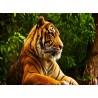 Topný obraz - Tygr