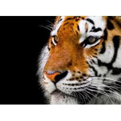 infrapanel - Tygr ve tmě