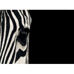 infrapanel - Zebra ve tmě