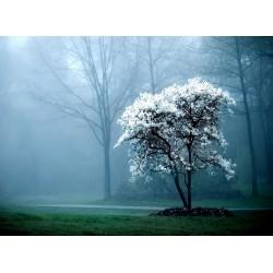 infrapanel - Bílý strom
