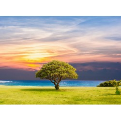 infrapanel - Osamělý strom