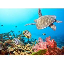 infrapanel - Mořský svět
